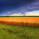 Problemas con la justificación de costes de cultivos